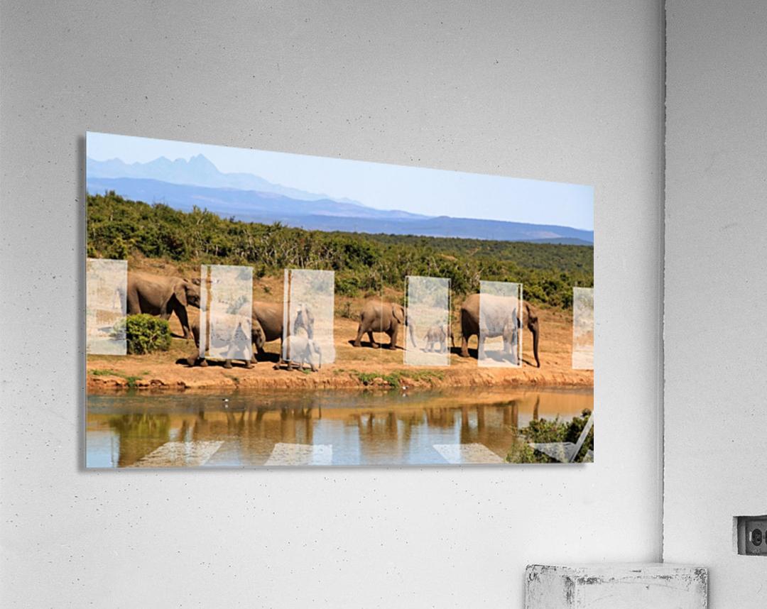 elephant herd of elephants  Acrylic Print