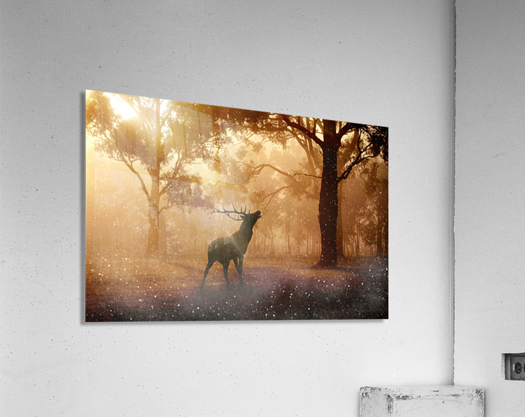hirsch wild antler nature forest  Acrylic Print