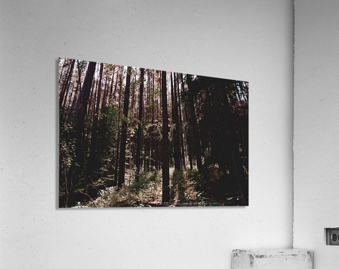 20190802_182317  Acrylic Print