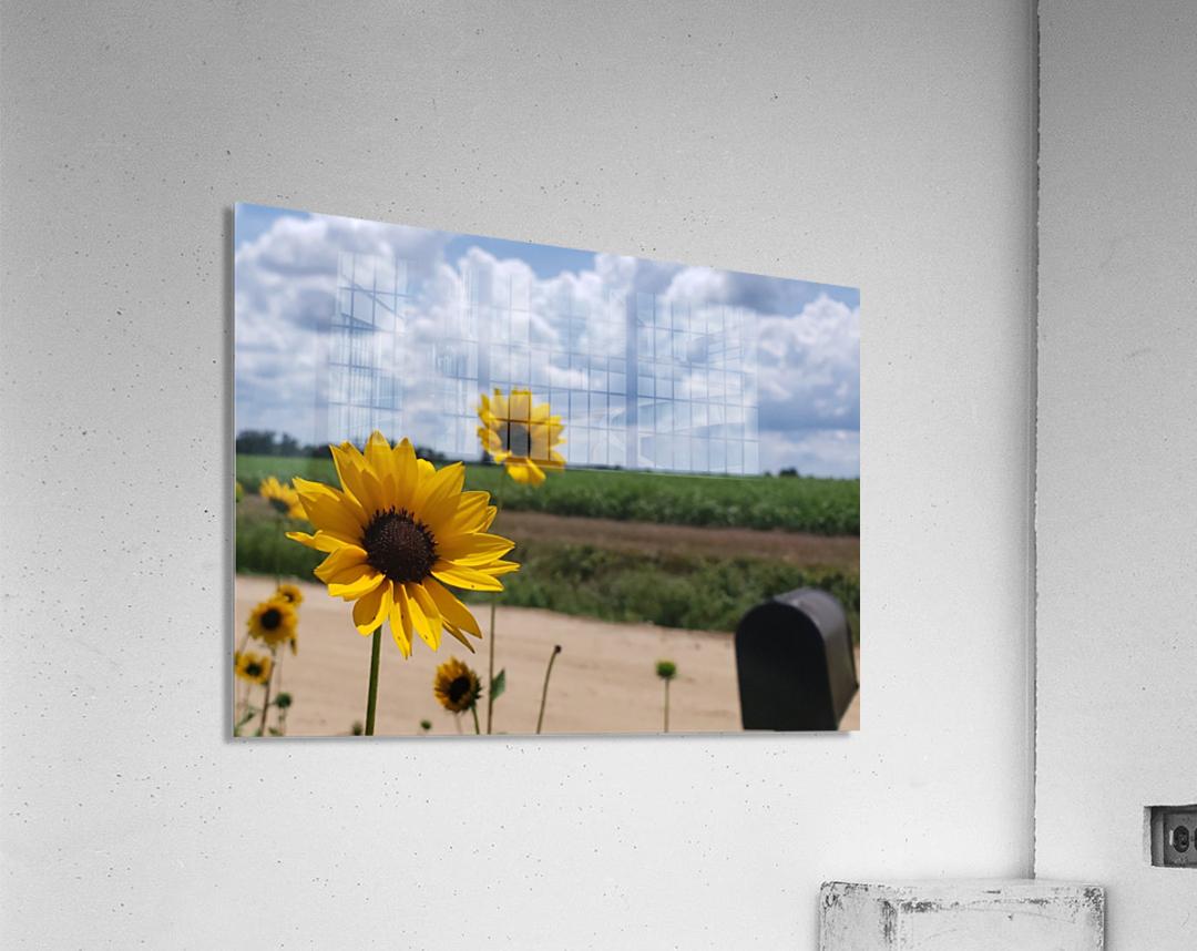 Dirt road views  Acrylic Print