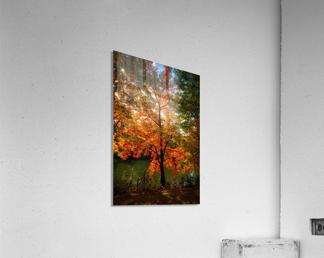 A fall colors tree  Impression acrylique
