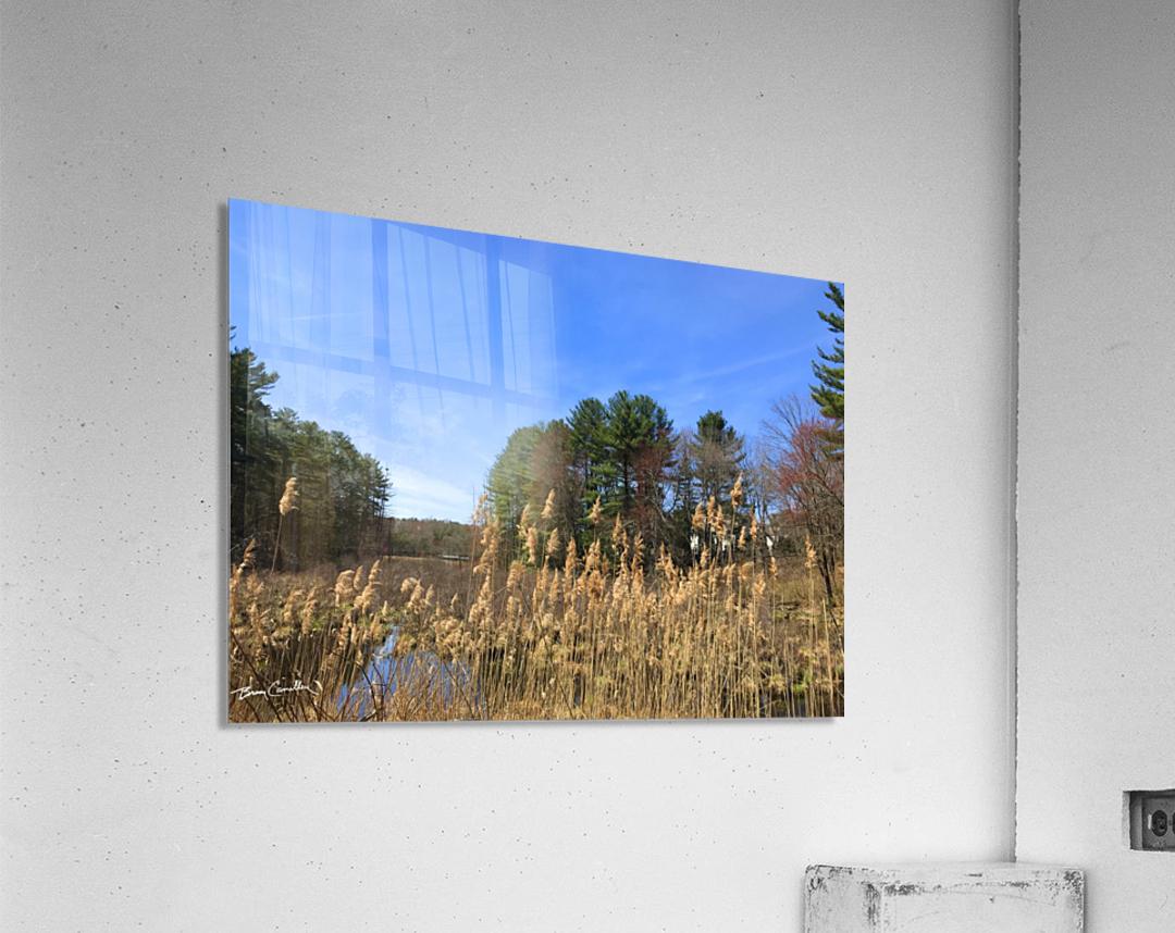 Simsbury Wetland  Acrylic Print
