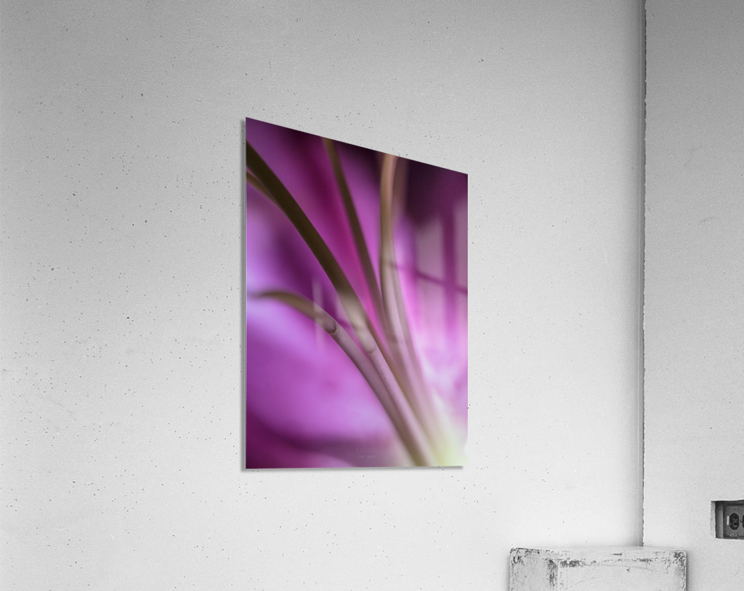 Pinky 5  Acrylic Print