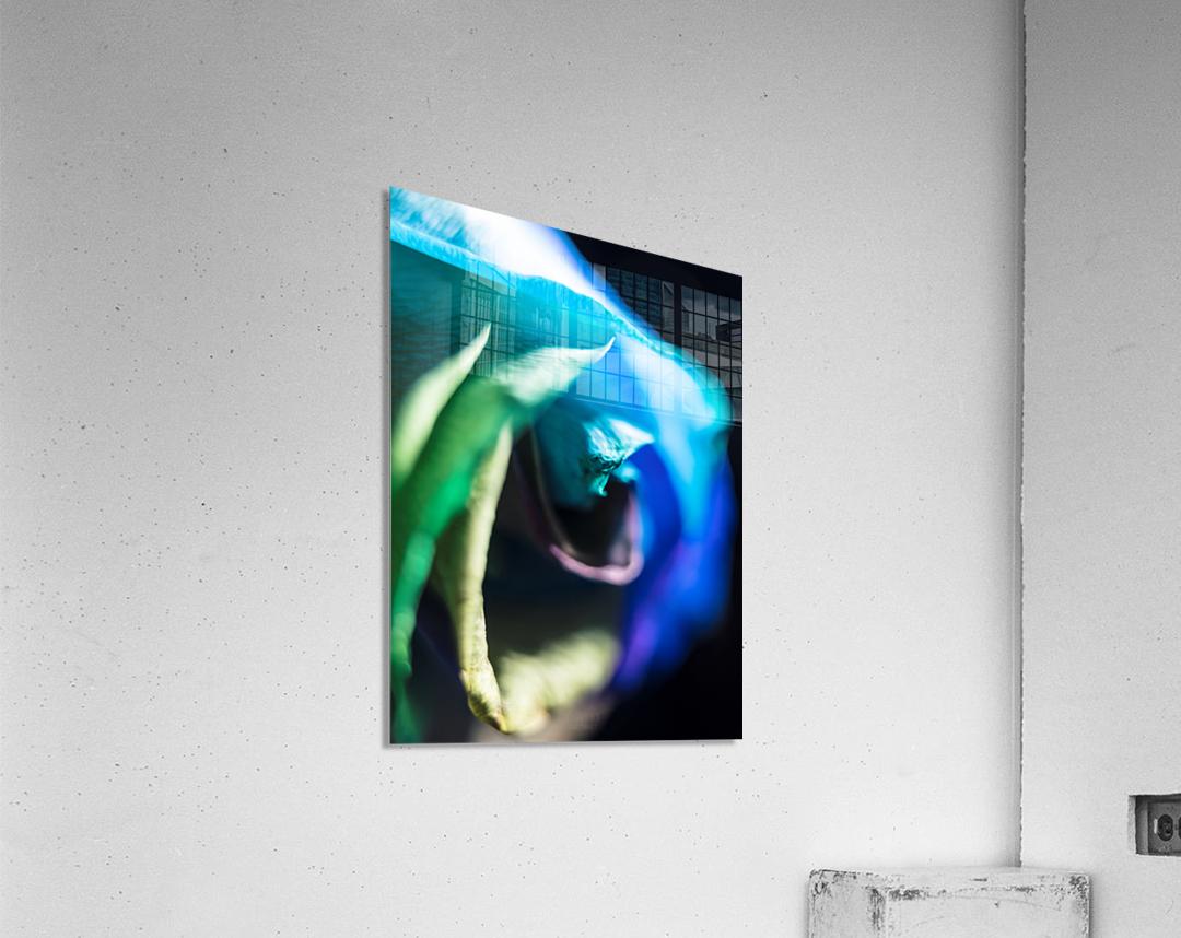 A bit of blue  Acrylic Print