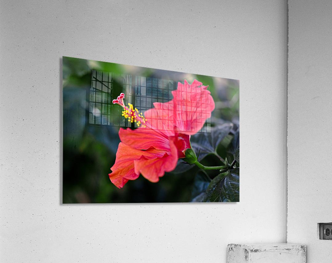Clear Cutting  Acrylic Print
