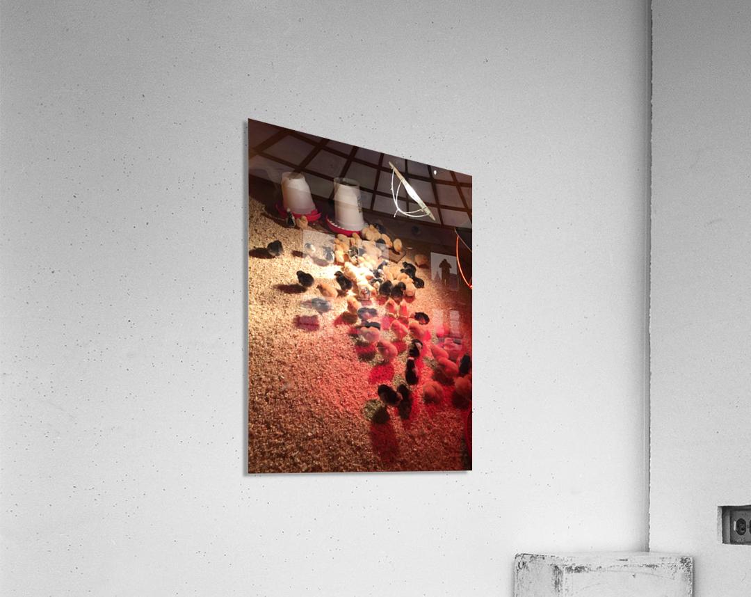 IMG_1171  Acrylic Print