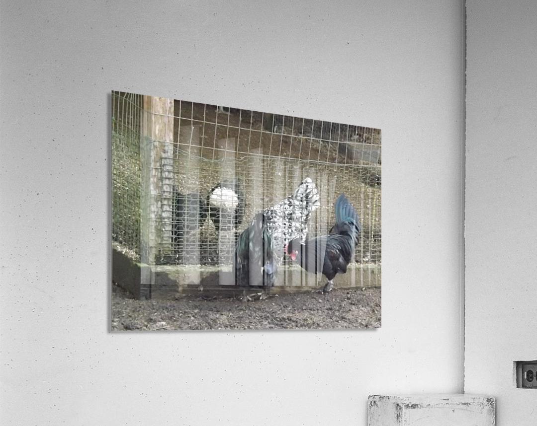 pics 044  Acrylic Print