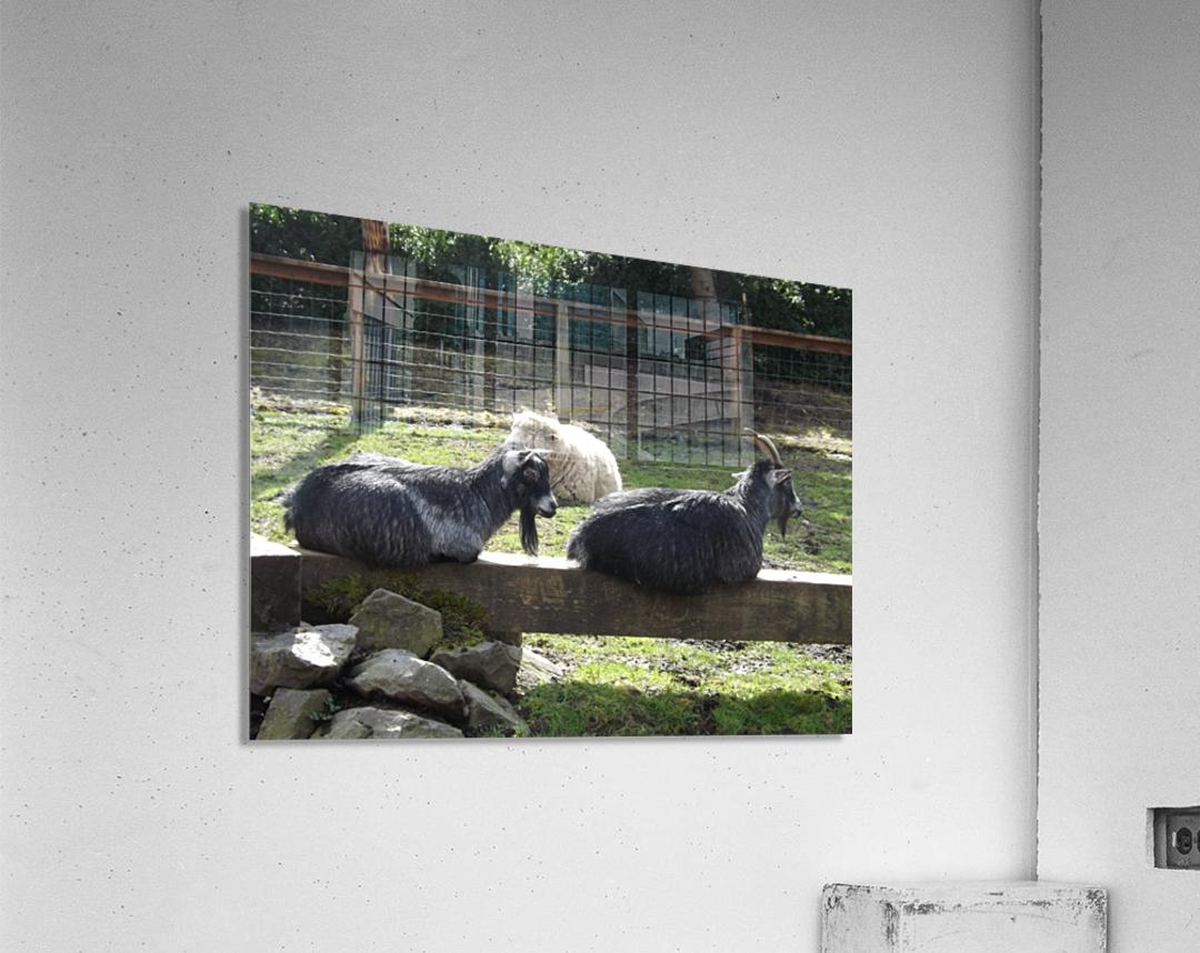 pics 057  Acrylic Print