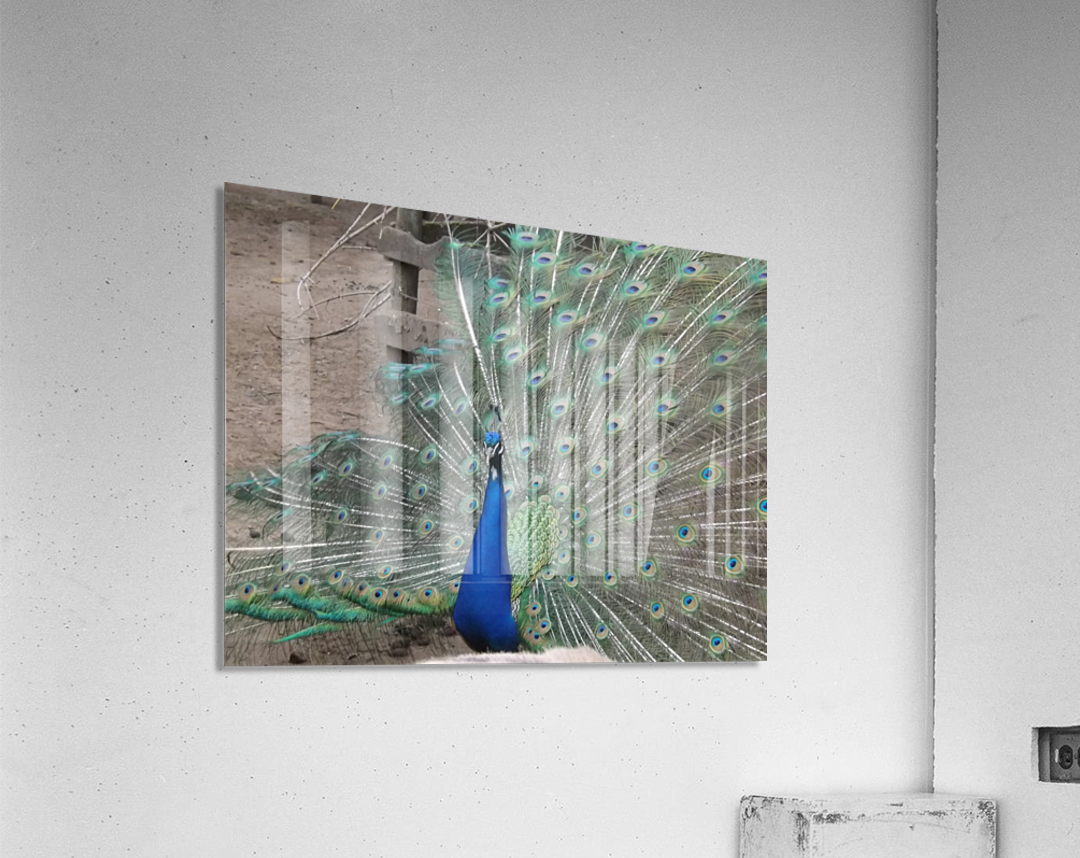 pics 127  Acrylic Print