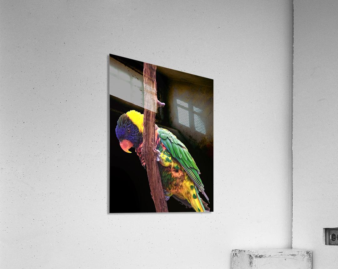 Colorful Bird on branch  Acrylic Print