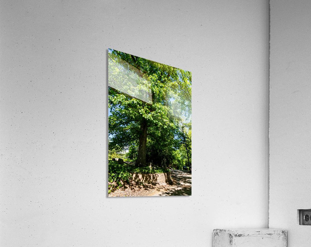 Tree Than Owns Itself   Athens GA 06567  Acrylic Print