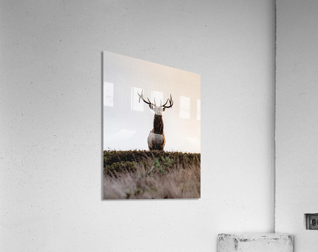 Tule Elk On Top Of A Hill  Acrylic Print