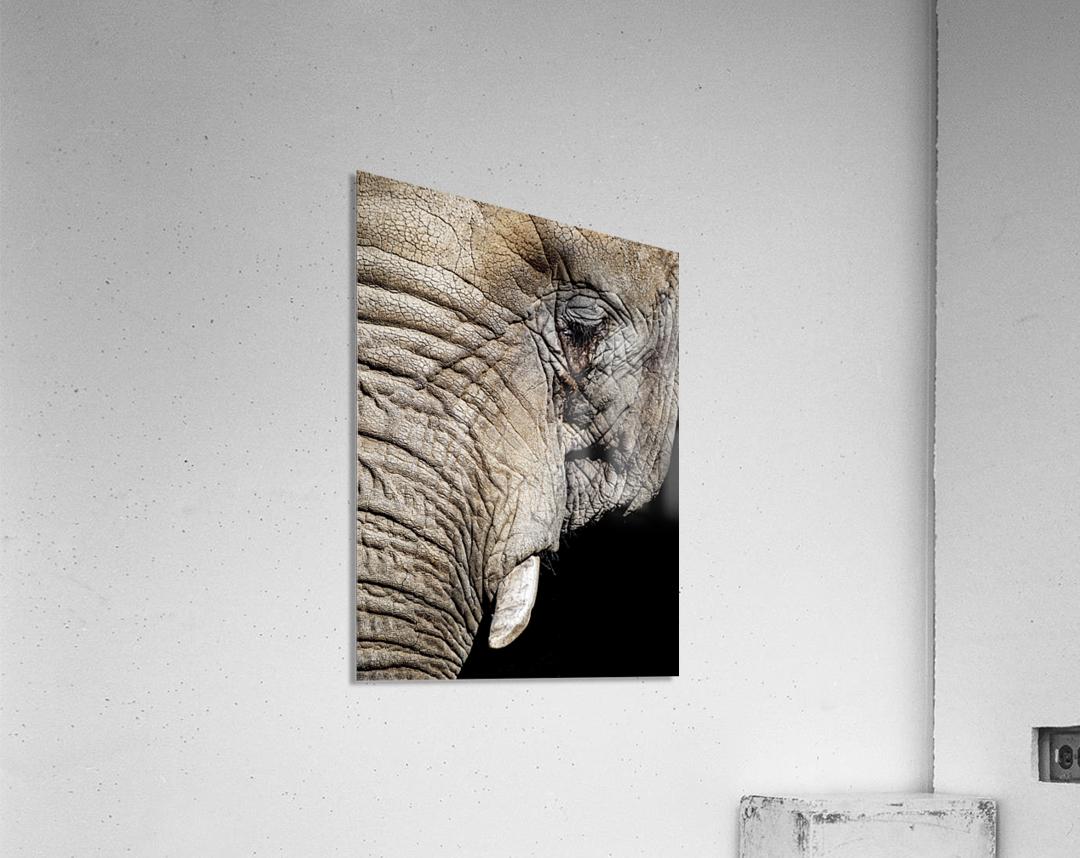 Elephant Close Up  Impression acrylique