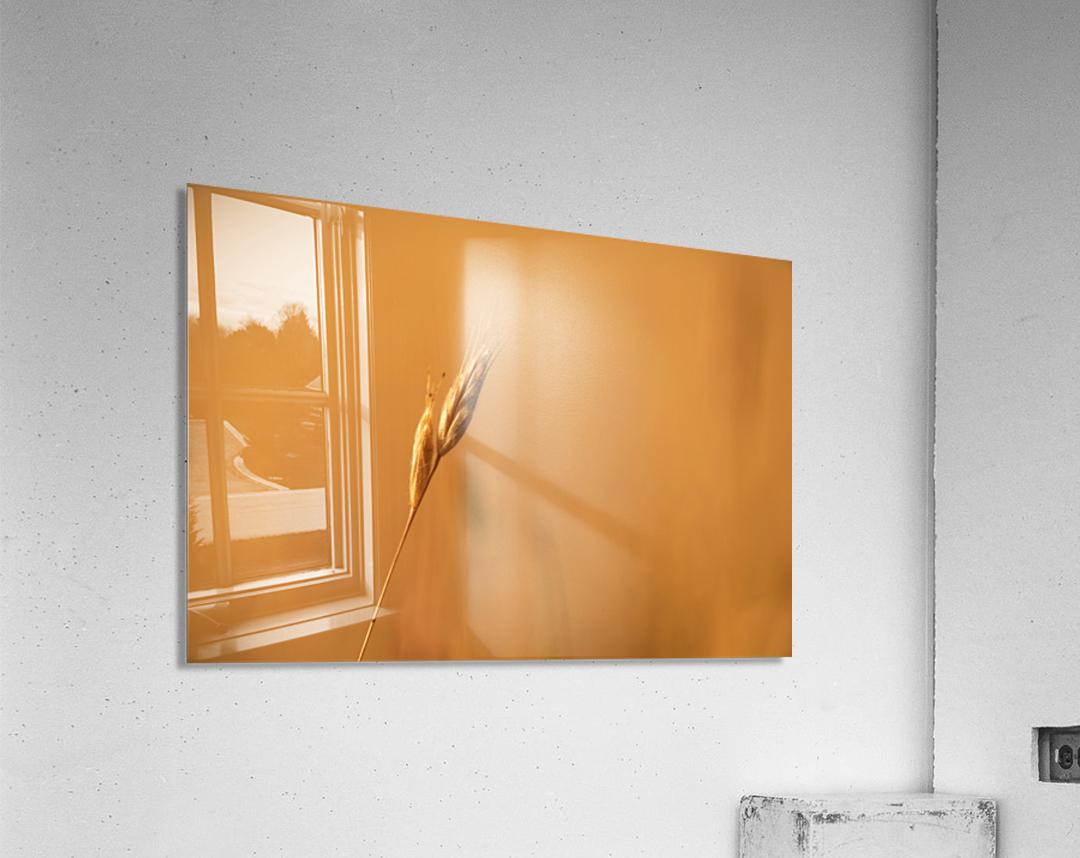 Golden Hour Grass  Acrylic Print