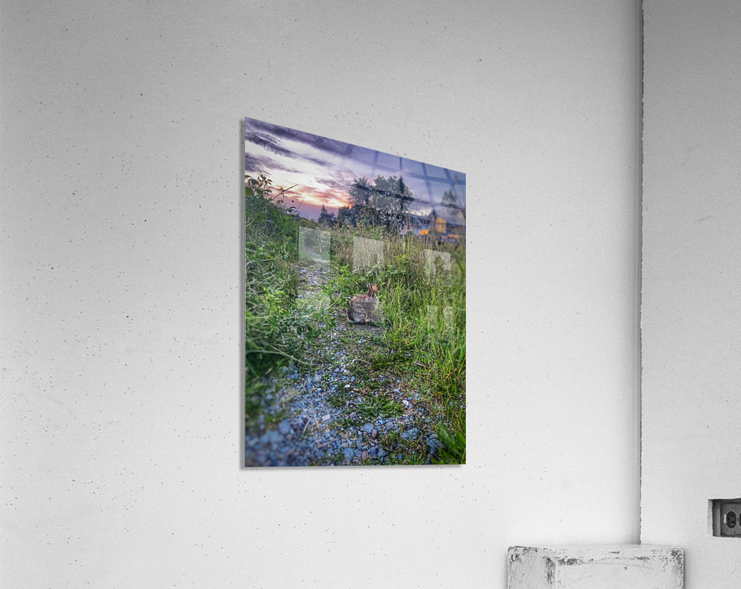 Sunset bunny  Acrylic Print