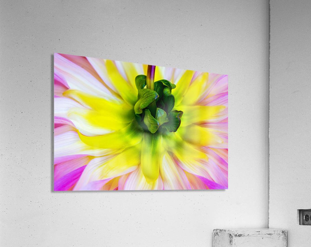 Pink Yellow Green   Acrylic Print
