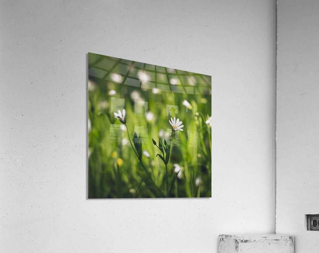 White on green  Acrylic Print