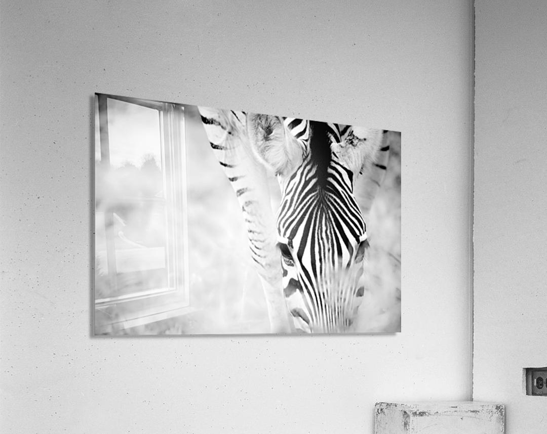 AdriaanPrinsloo 6718  Acrylic Print