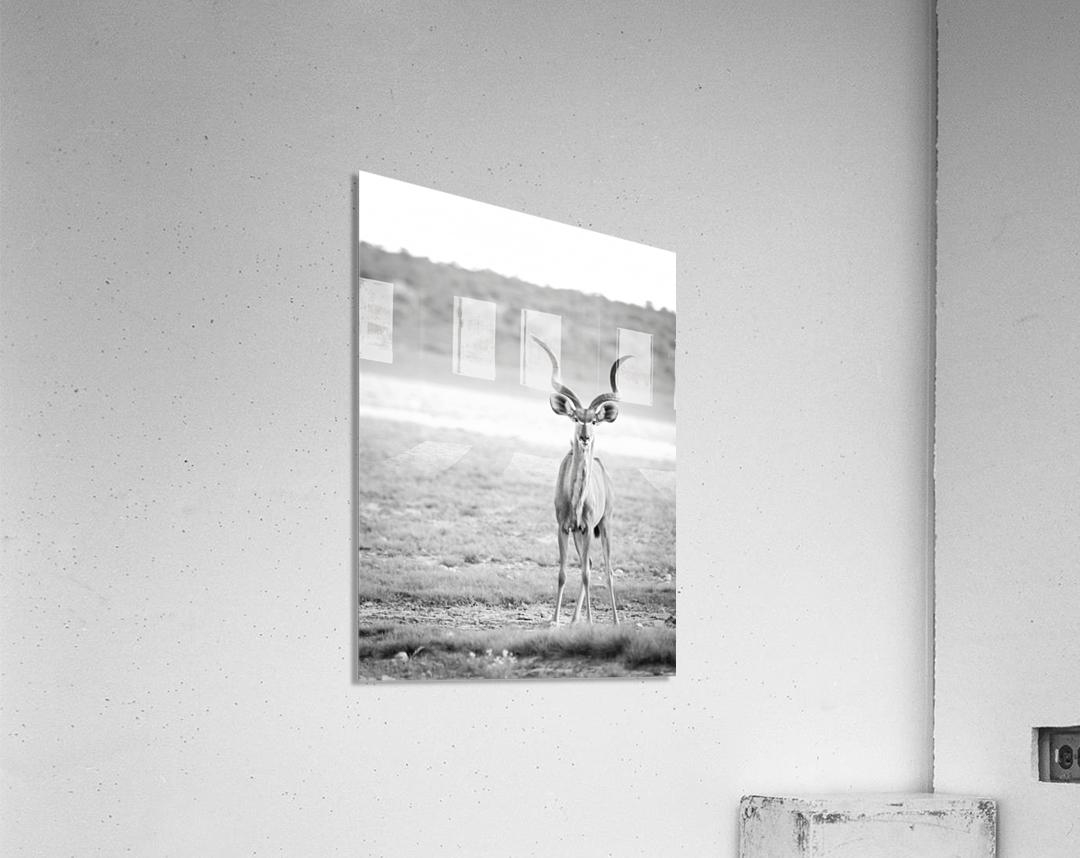 AdriaanPrinsloo 6071  Acrylic Print