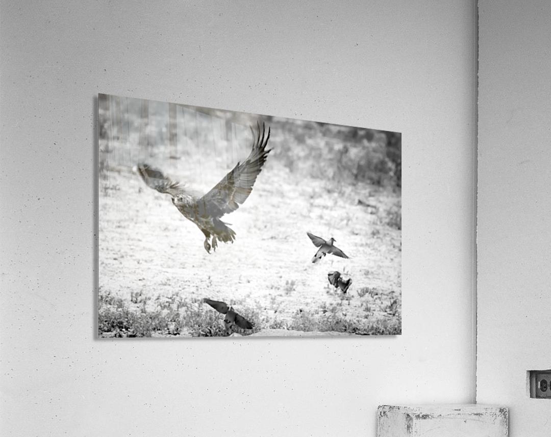 AdriaanPrinsloo 7140  Acrylic Print
