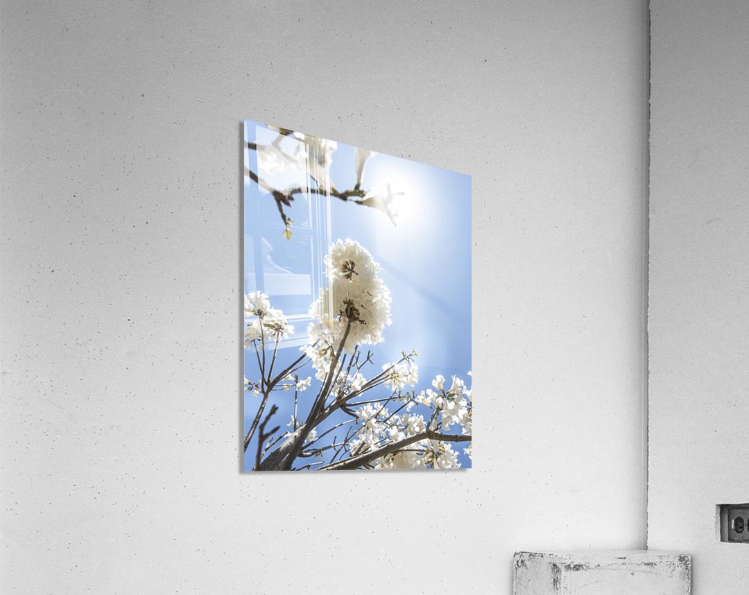 Bright white - glow  Acrylic Print