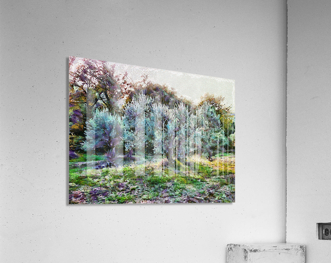 Colorful Olive Grove  Acrylic Print