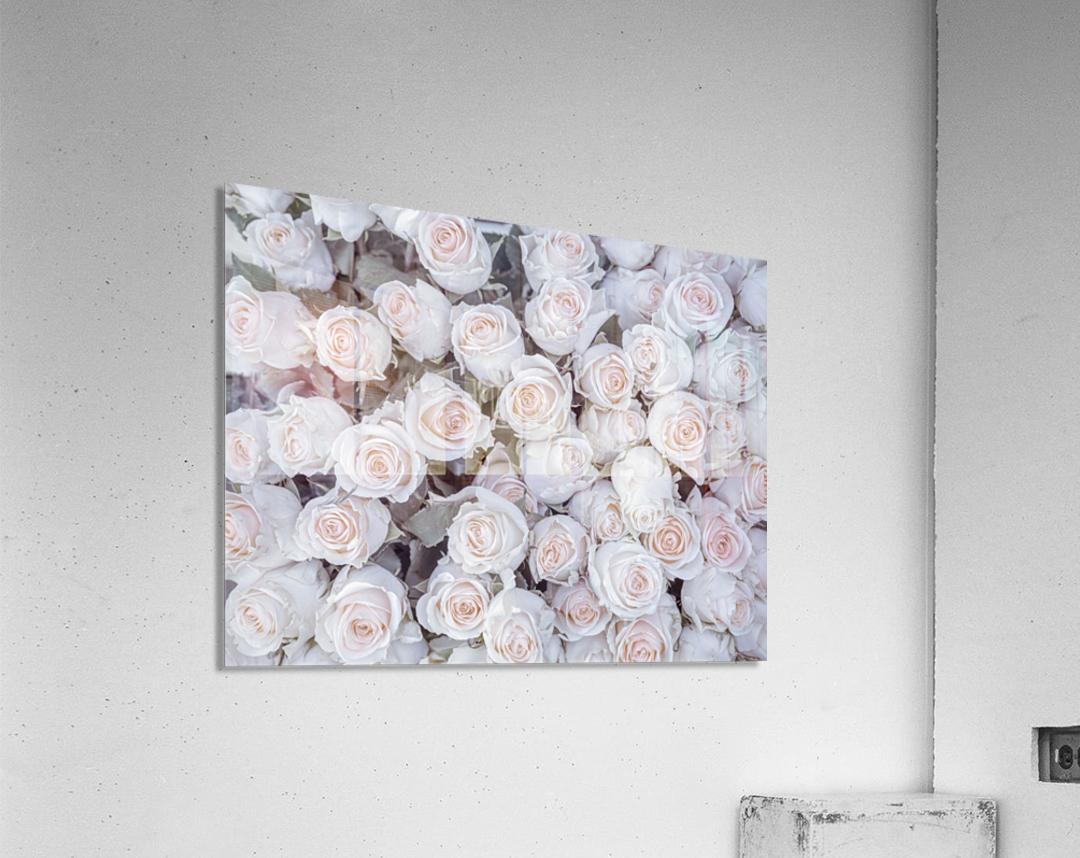 Full frame of Roses  Acrylic Print