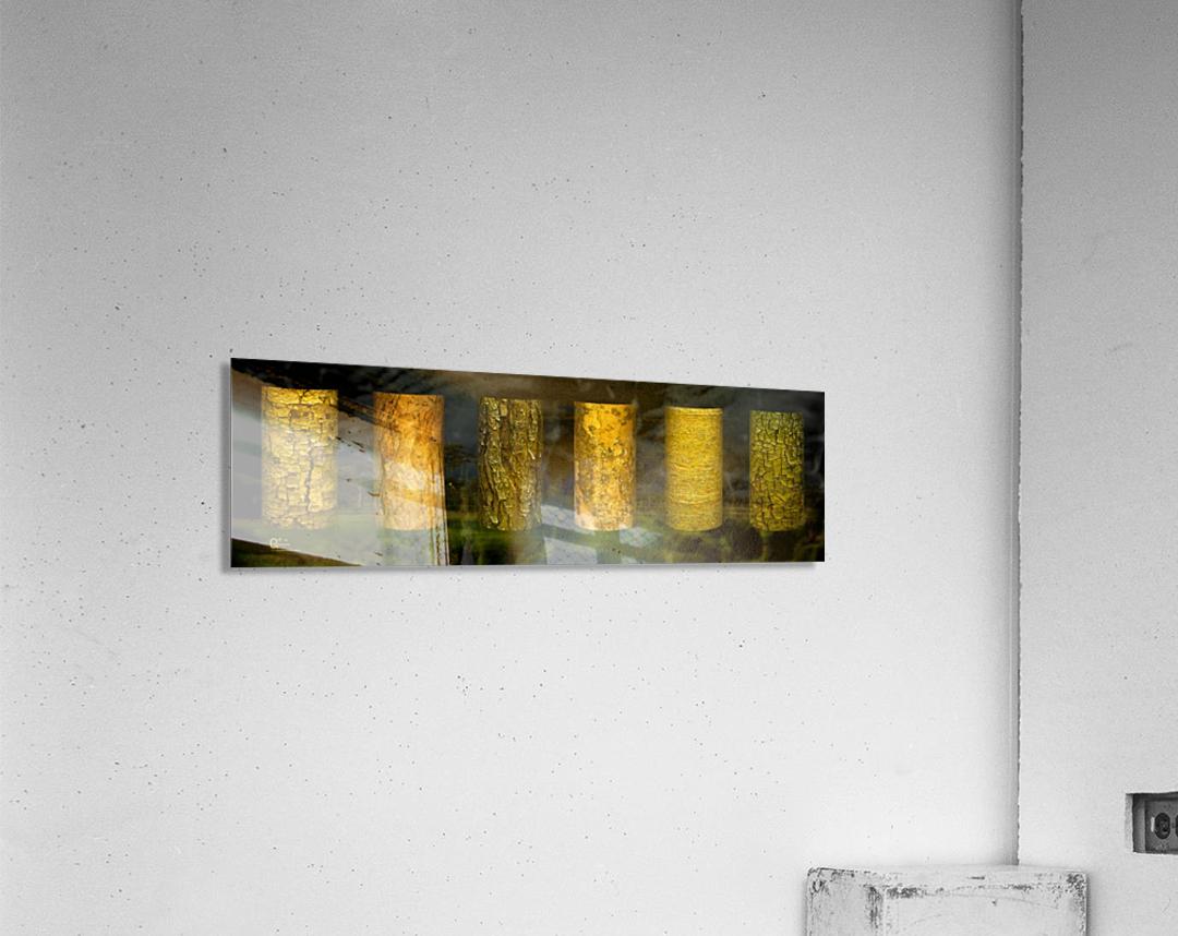tree bark sentinels  Acrylic Print