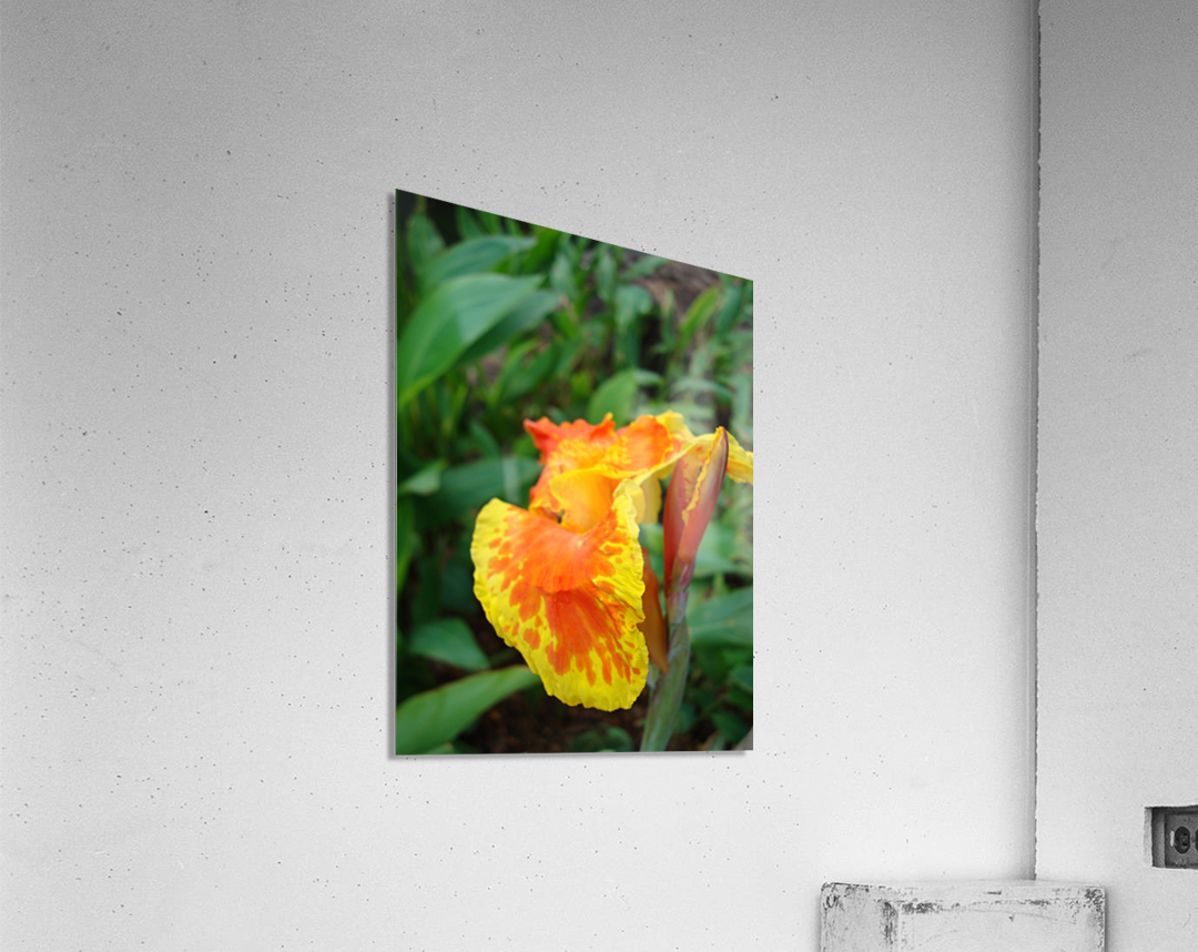 Floral Delight  Acrylic Print