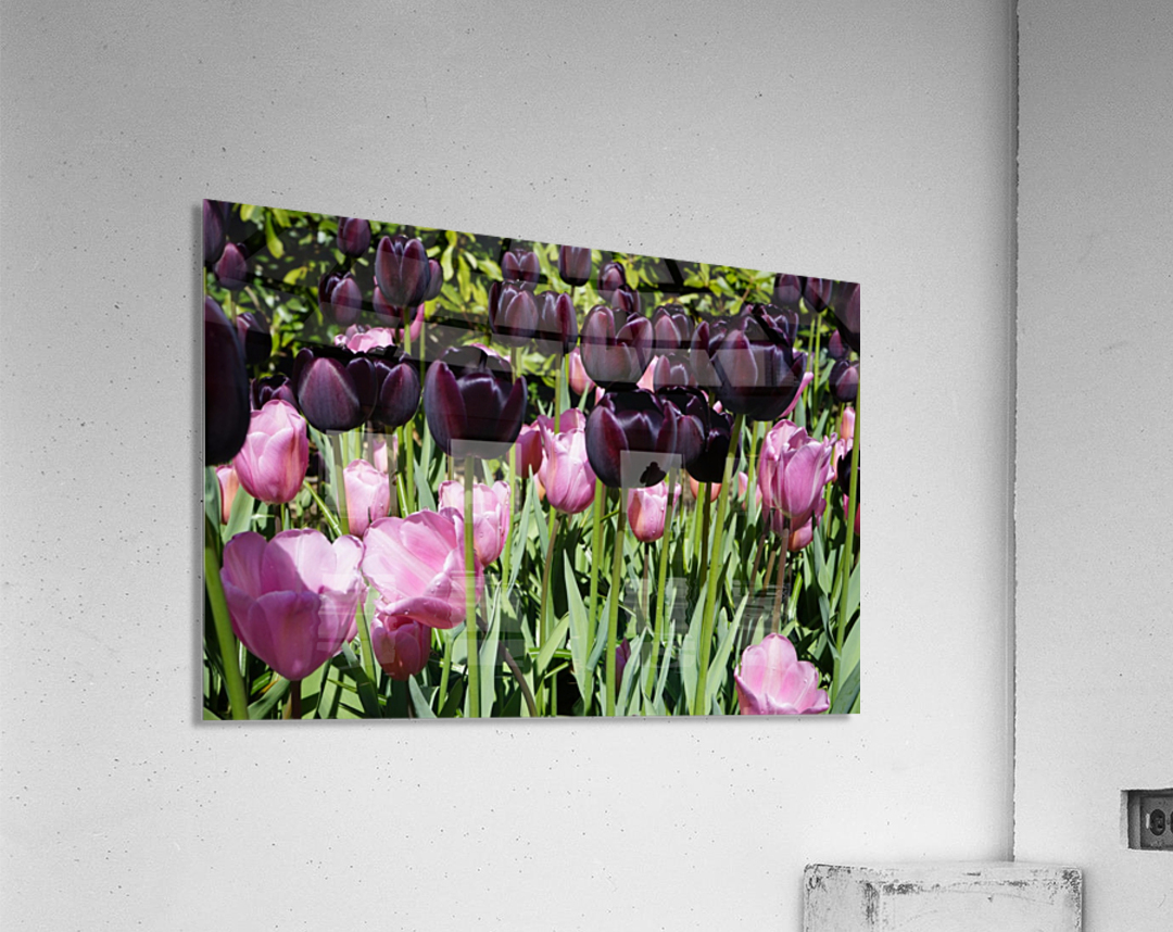 Spring Blooms of Holland 5 of 8  Acrylic Print