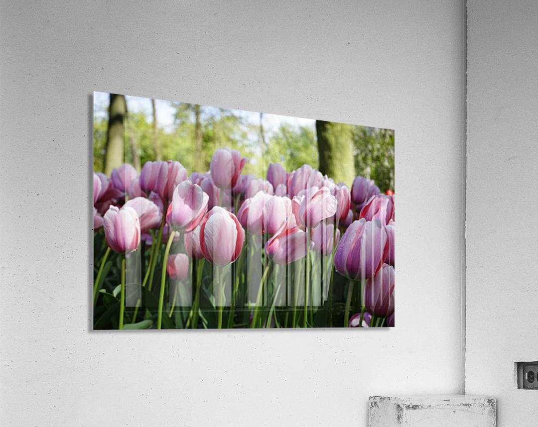 Pink & White  Acrylic Print