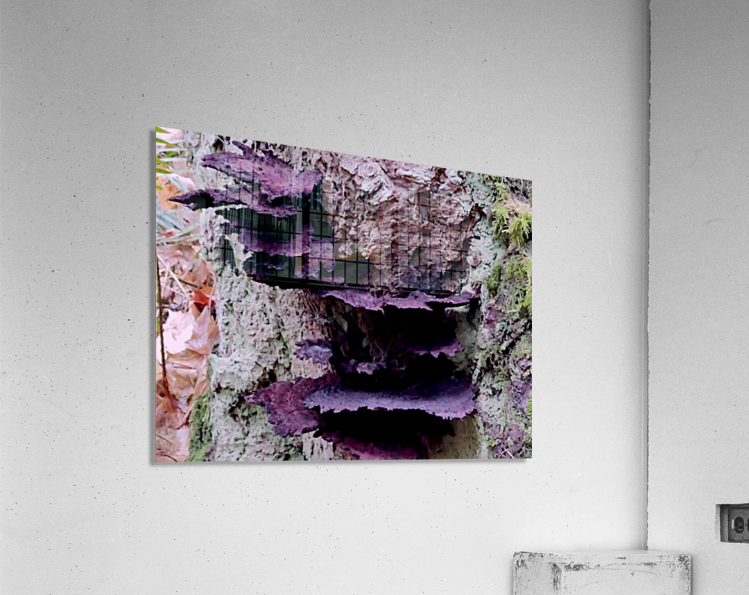 Tiny World 8 of 8 - Mushrooms and Fungi  Acrylic Print
