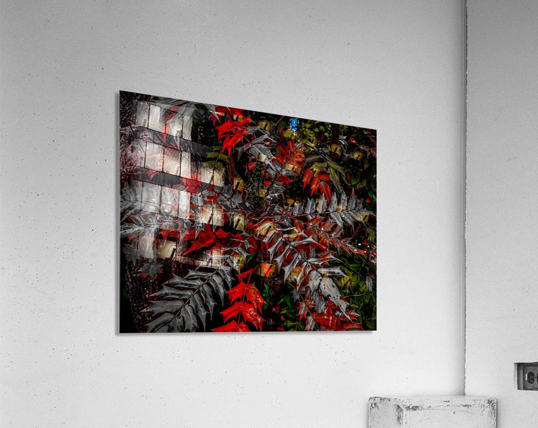 Holly Explosion  Acrylic Print