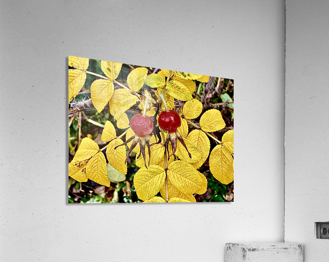 Two Red Berries  Acrylic Print