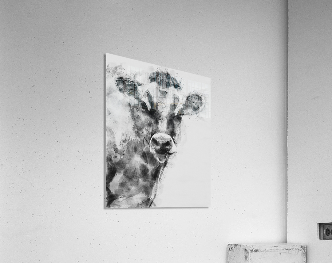 Dairy Cow Black and White  Acrylic Print