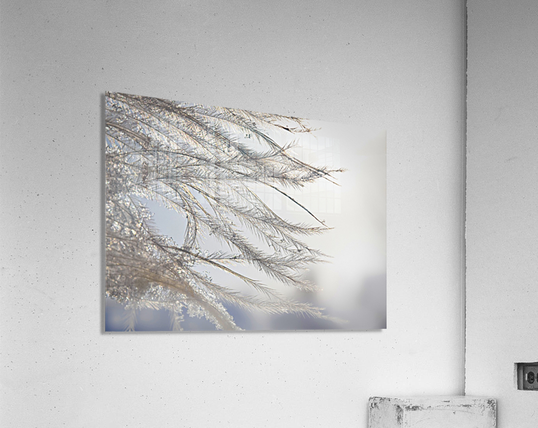 Plumeau  Acrylic Print