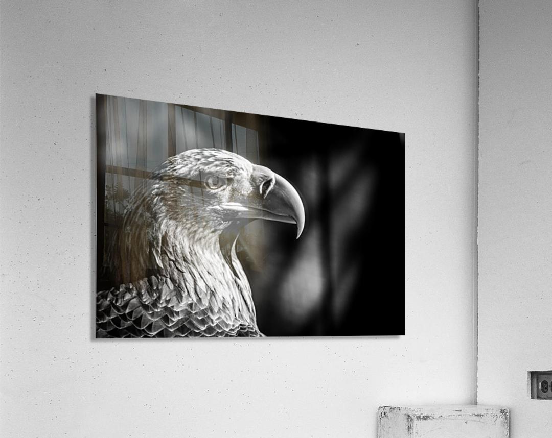 Eagle ap 2046 B&W  Acrylic Print