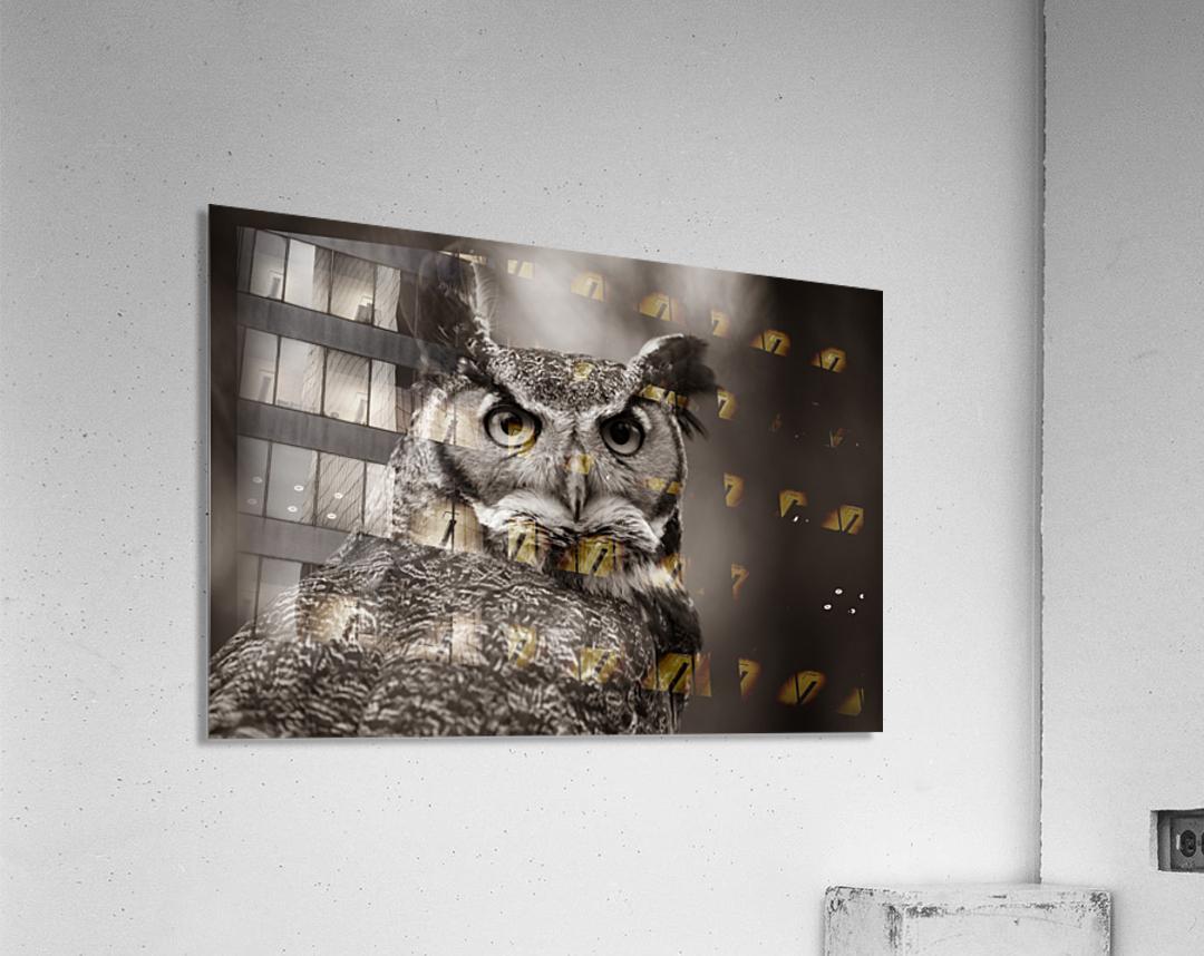 Great Horned Owl ap 2860 B&W  Acrylic Print