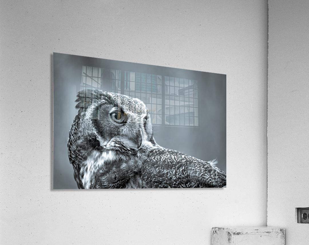 Great Horned Owl ap 2861 B&W  Acrylic Print