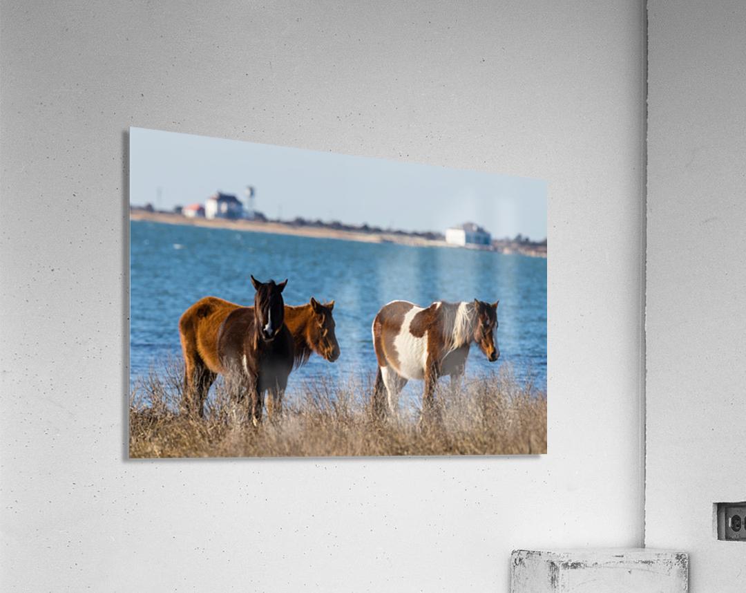 Wild Horses ap 2796  Acrylic Print