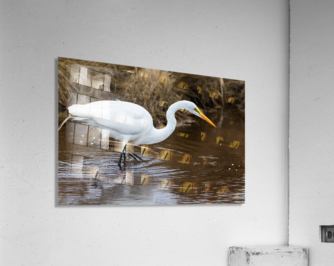 Great White Egret ap 2802  Impression acrylique