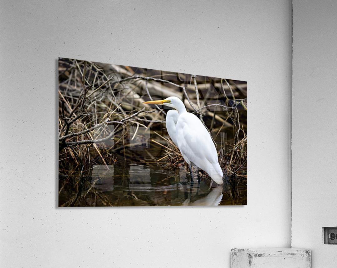 Great White Egret ap 2807  Impression acrylique