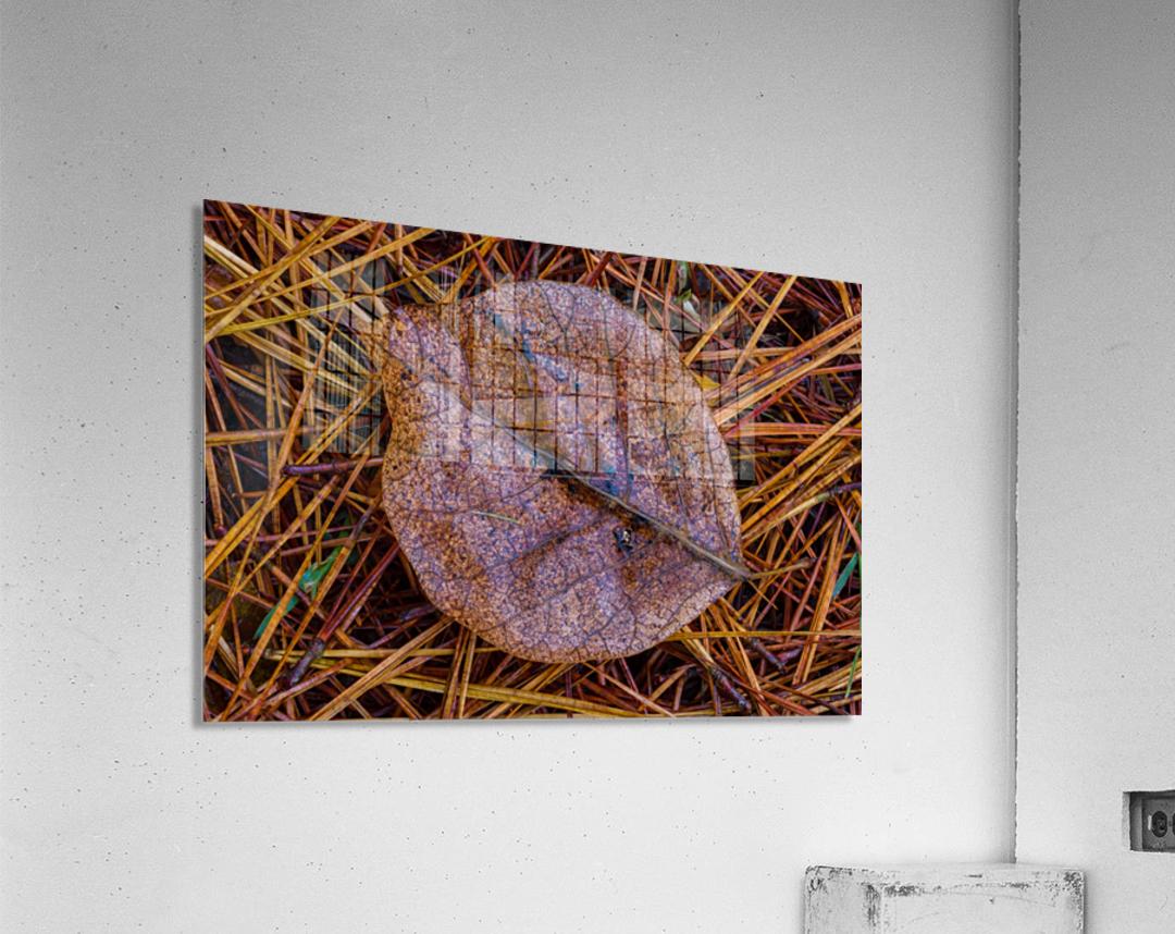 Leaf ap 1838  Acrylic Print