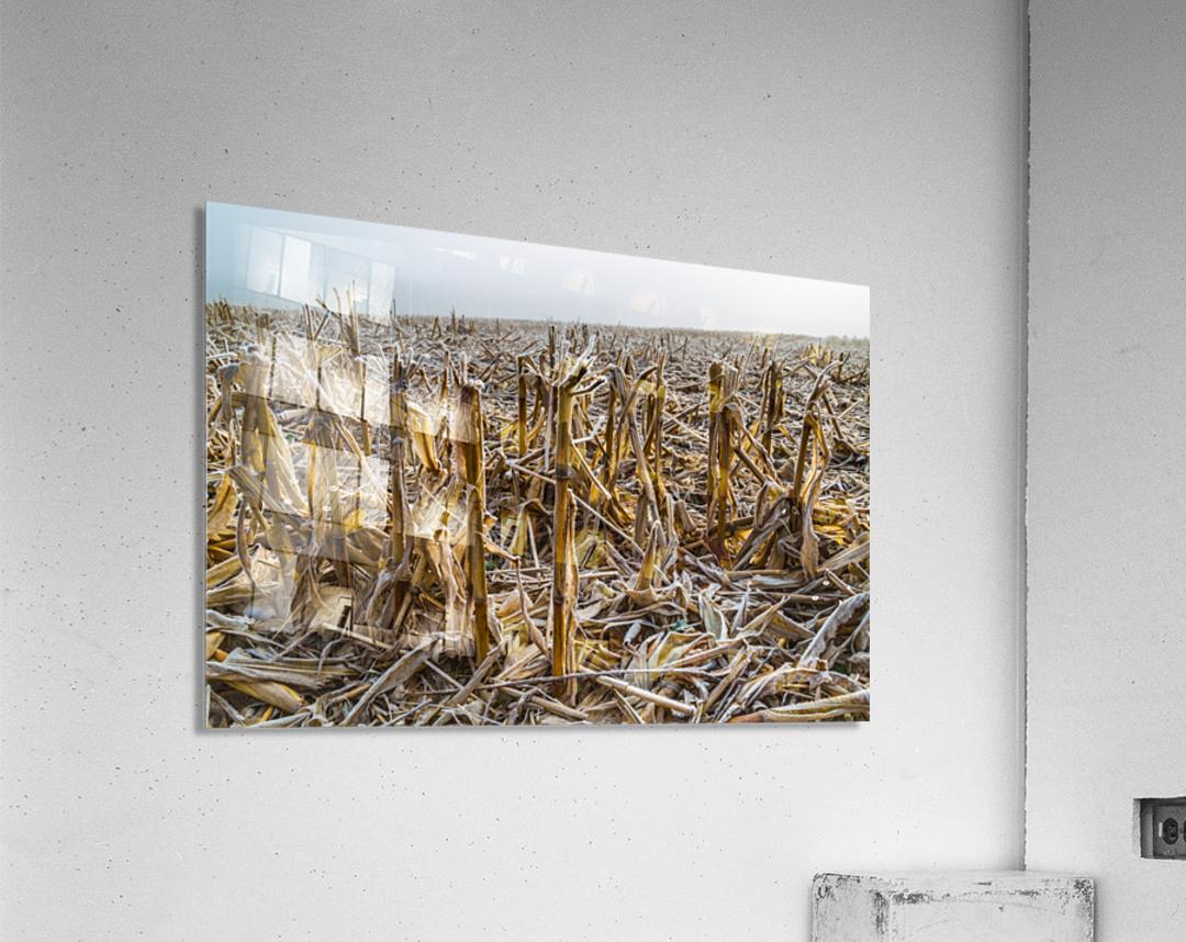 Frost ap 2031  Acrylic Print