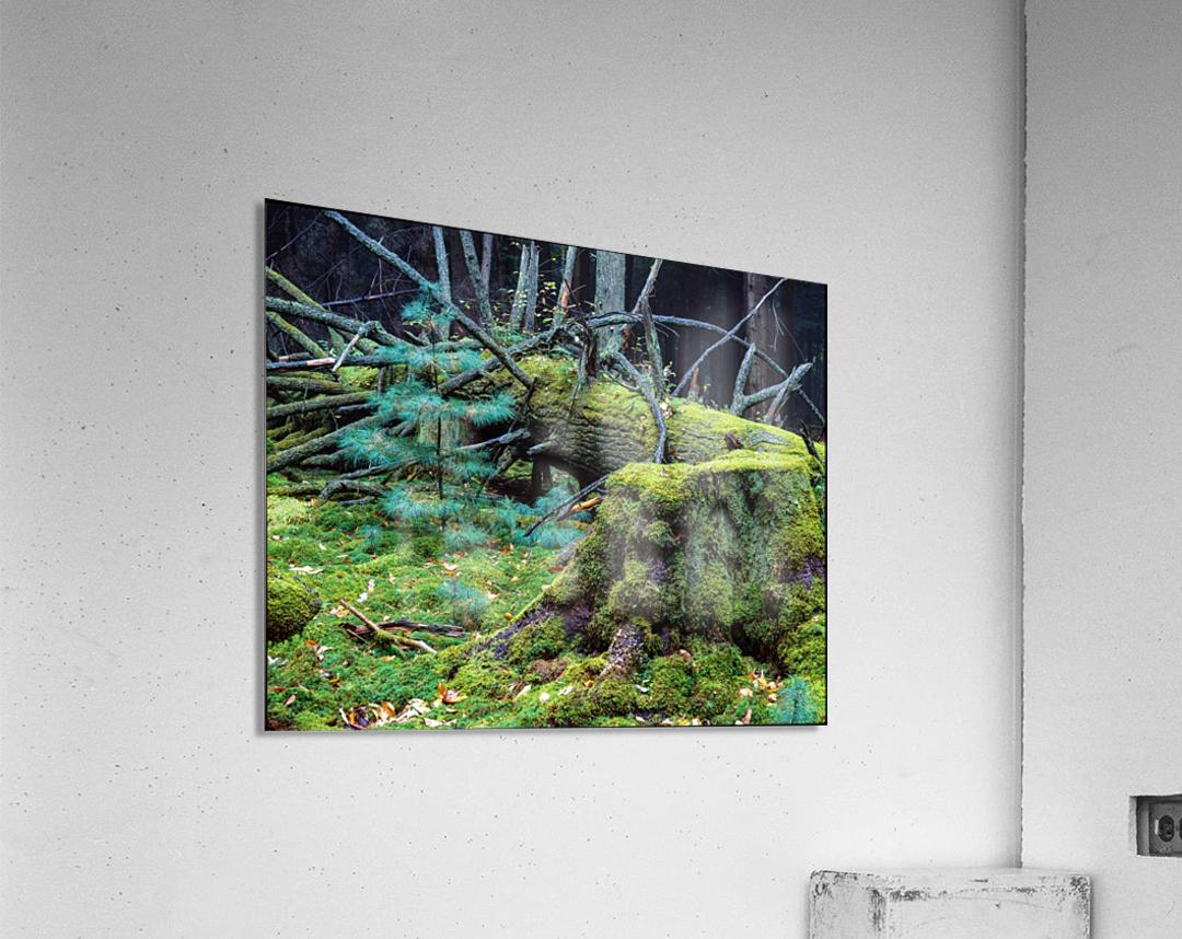 Fallen Giant ap 1513  Acrylic Print