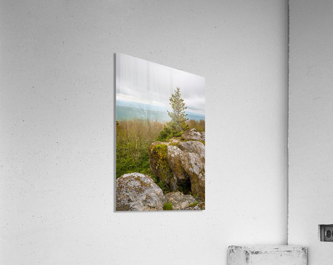 Hanging On ap 2943  Acrylic Print