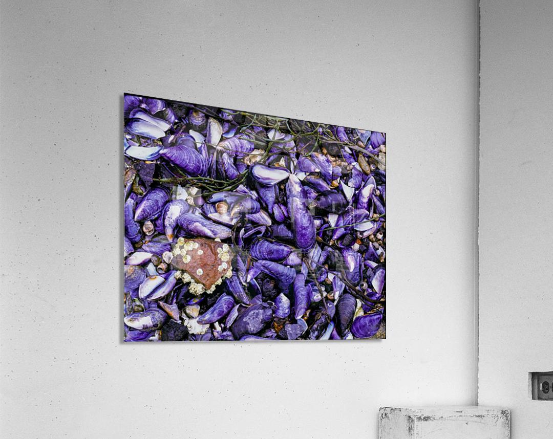 Shells ap 1519  Acrylic Print