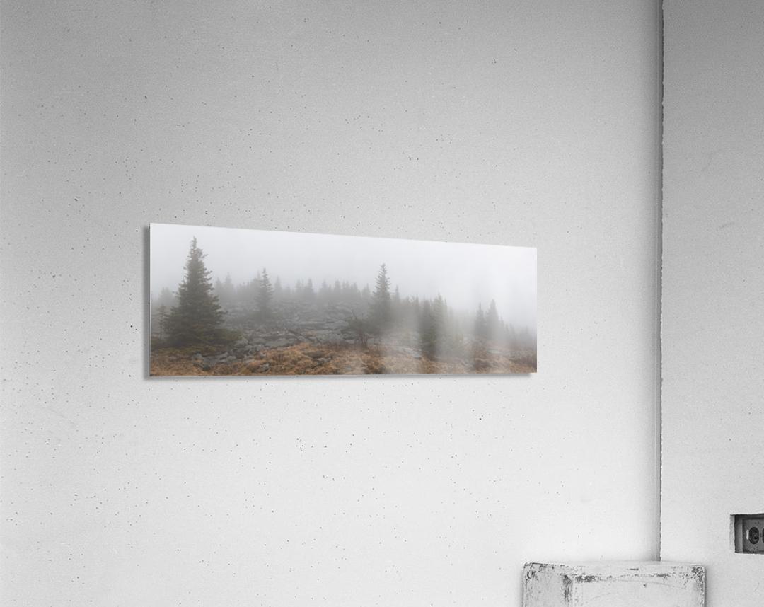 Pines apmi 1602  Acrylic Print