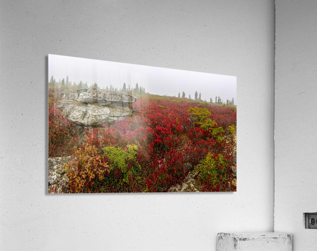 Alpine Tundra apmi 1812  Acrylic Print