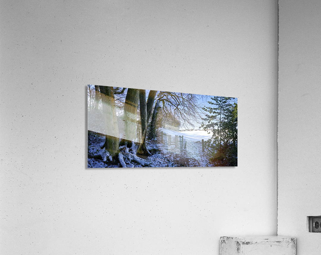 Woods in the Snow  Acrylic Print